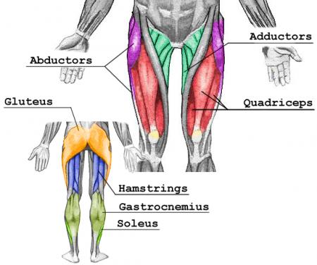 如何強化膝蓋運動