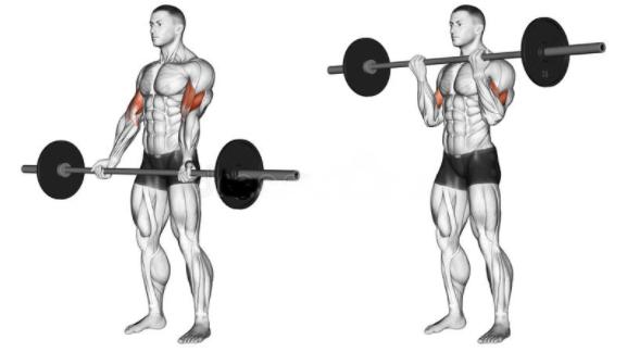 如何增強臂力
